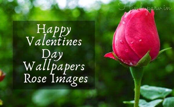 Rose Day Best Photos for Couple 2021