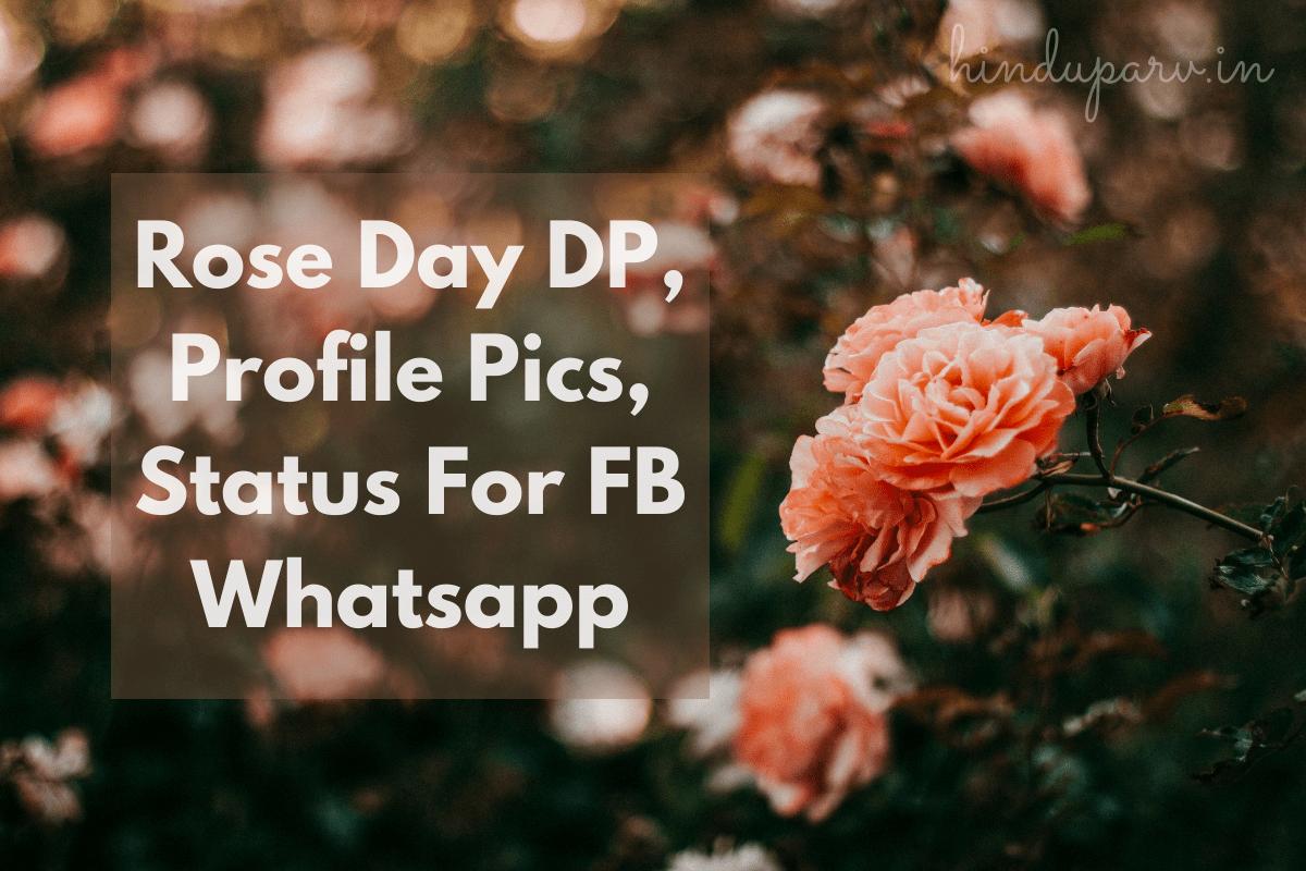 Rose Day 2021 Dp Profile Pics Status For Fb Whatsapp Hindu Parv